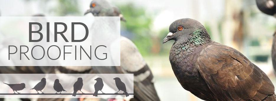 Bird Proofing