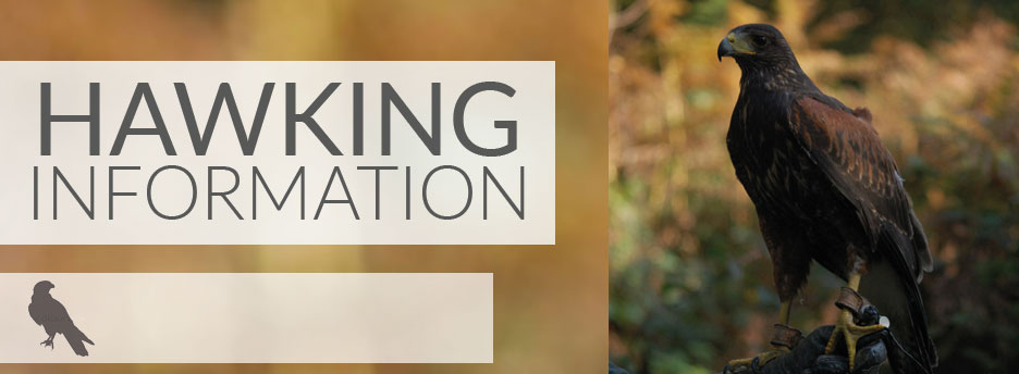 hawking-information